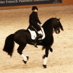 Due frisoni alla FEI World Cup™